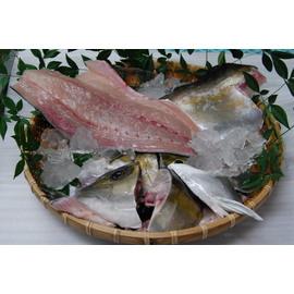 甑島産 カンパチ1尾3枚下ろし(約3.6kg)