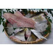 甑島産 カンパチ1尾3枚下ろし(約3.8kg)